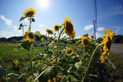猛烈な暑さに日の用心_b0145296_16215820.jpg