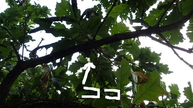b0093800_19435582.jpg