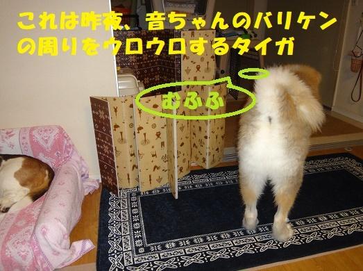 f0121712_15451233.jpg