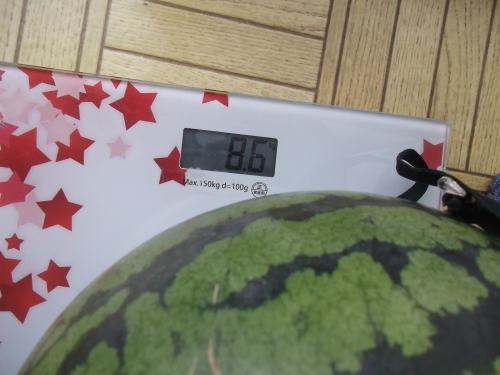 夏野菜は..次々と終了_b0137932_18145407.jpg
