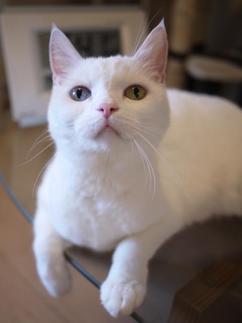 猫のお留守番 リュウちゃん編。_a0143140_00135591.jpg