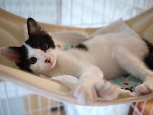 猫のお預かり Maluくん編。_a0143140_22483809.jpg