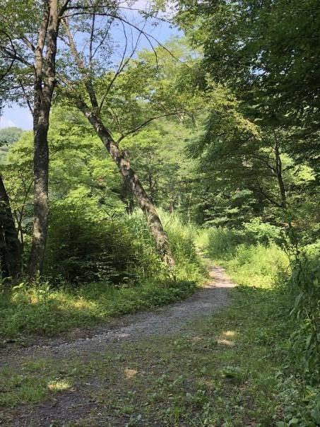 今年の夏は北軽井沢も暑い_c0341450_04481059.jpg