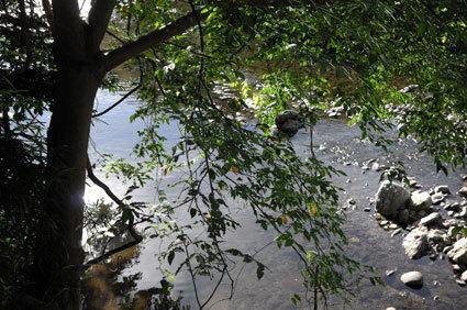 せめて日陰で川の流れでも_b0145296_18044461.jpg