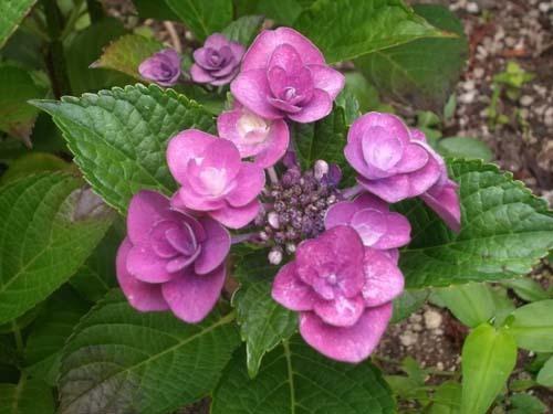 庭の花_f0019498_07290000.jpg