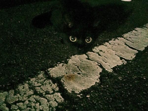 お久しぶりです黒です。近所の猫祭です。入荷GUCCIお財布、GUCCIシルバーリング_f0180307_20253924.jpg