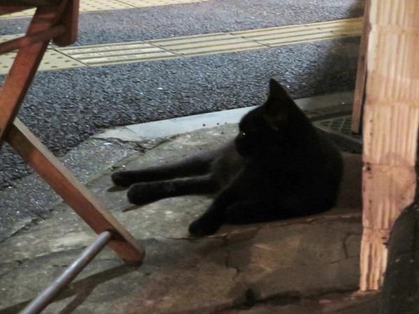 お久しぶりです黒です。近所の猫祭です。入荷GUCCIお財布、GUCCIシルバーリング_f0180307_20282117.jpg