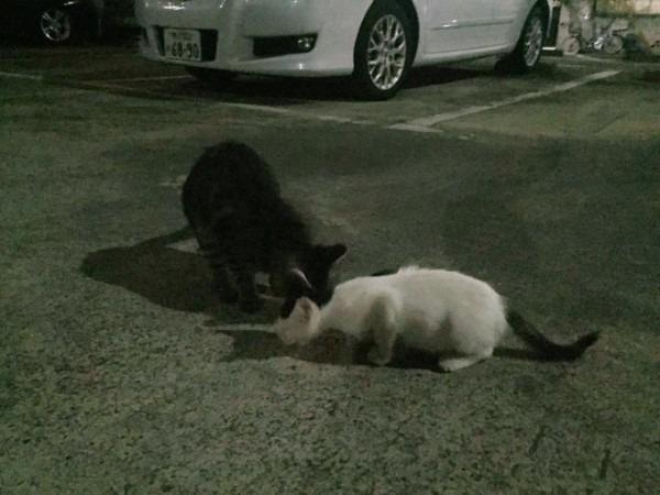 お久しぶりです黒です。近所の猫祭です。入荷GUCCIお財布、GUCCIシルバーリング_f0180307_21335343.jpg