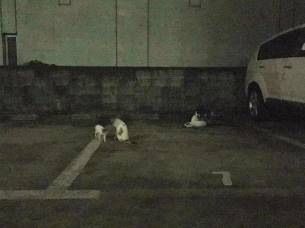 お久しぶりです黒です。近所の猫祭です。入荷GUCCIお財布、GUCCIシルバーリング_f0180307_21335862.jpg