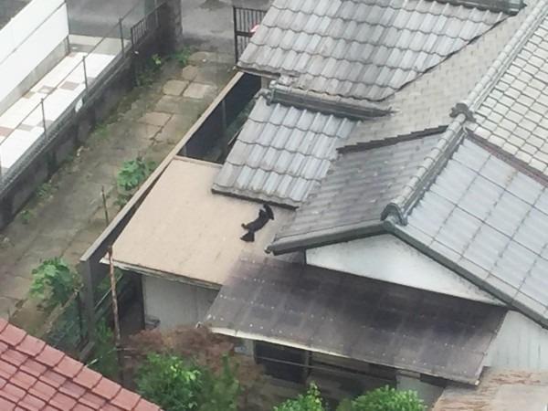 お久しぶりです黒です。近所の猫祭です。入荷GUCCIお財布、GUCCIシルバーリング_f0180307_21462509.jpg