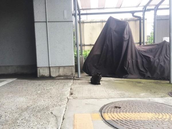 お久しぶりです黒です。近所の猫祭です。入荷GUCCIお財布、GUCCIシルバーリング_f0180307_21481749.jpg