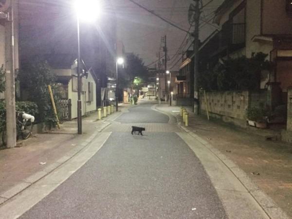 お久しぶりです黒です。近所の猫祭です。入荷GUCCIお財布、GUCCIシルバーリング_f0180307_21494358.jpg