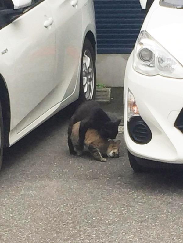 お久しぶりです黒です。近所の猫祭です。入荷GUCCIお財布、GUCCIシルバーリング_f0180307_21500473.jpg