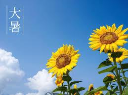 大暑とは(大杉)_f0354314_15065184.jpg