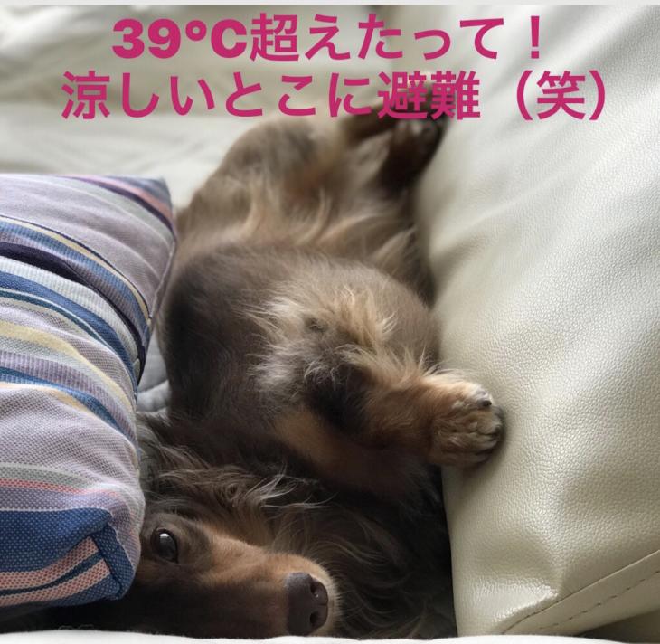 c0117831_16280036.jpg