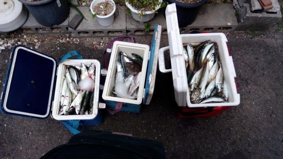 魚ロッケは作れたのか②_b0217741_23465562.jpg