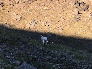 O\'Malley Peak  オマリーピーク_b0135948_19191541.jpg