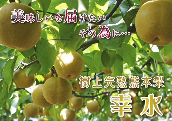 熊本梨 こだわりの樹上完熟梨『幸水』 先行予約の受付をスタート!初回出荷は7月31日(火)です!_a0254656_16485511.jpg