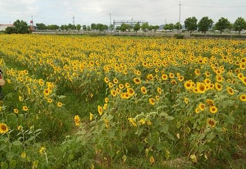 ひまわりの丘公園(中平)_f0354314_16291547.jpg