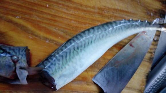 魚ロッケは作れたのか③_b0217741_23201113.jpg