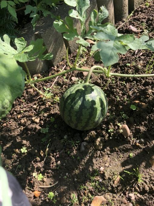 収穫の便り_b0093660_23350719.jpg