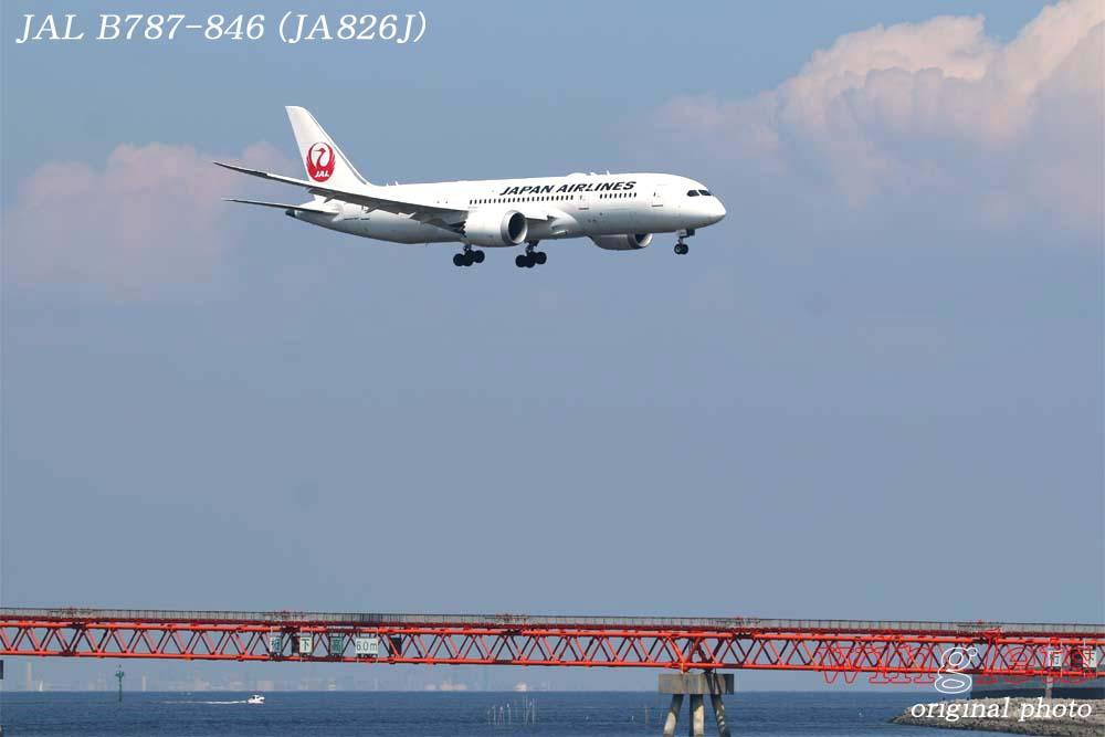 '18年 京浜島・つばさ公園レポート ・・・ JAL/JA826J_f0352866_22418100.jpg