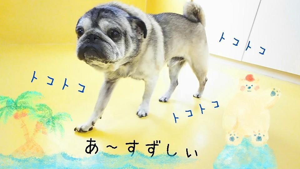 すずしぃねぇ~✨_f0357682_15125628.jpg