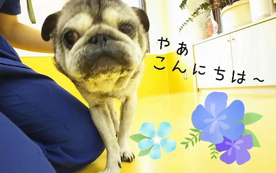 すずしぃねぇ~✨_f0357682_15125656.jpg