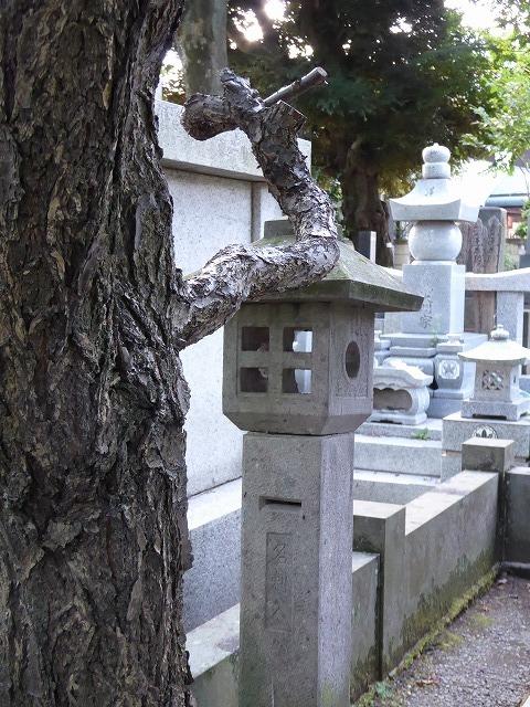 雑司ヶ谷霊園巡りと宣教師館♪ 有名な人のお墓見てきたよ~♪_b0287088_21562108.jpg