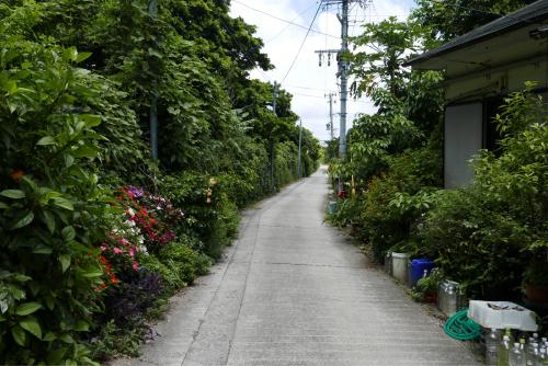 海界の村を歩く 東シナ海 小宝島_d0147406_17242356.jpg