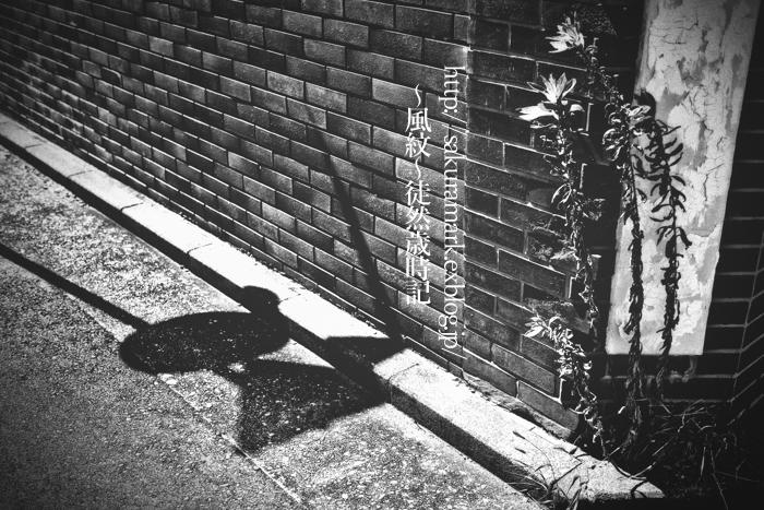 夏草と焼きついた影。_f0235723_2013949.jpg