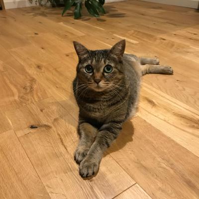 猫の体は柔らかいね。_f0393824_23382644.jpg