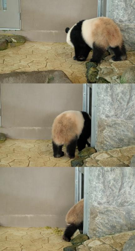 パンダに大接近!_f0179404_22224079.jpg