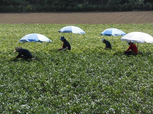 全国農福連携推進協議会の会長・濱田健司さんと回った富士市の「農福連携」の取り組み_f0141310_08180456.jpg