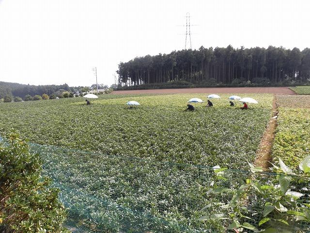 全国農福連携推進協議会の会長・濱田健司さんと回った富士市の「農福連携」の取り組み_f0141310_08181088.jpg