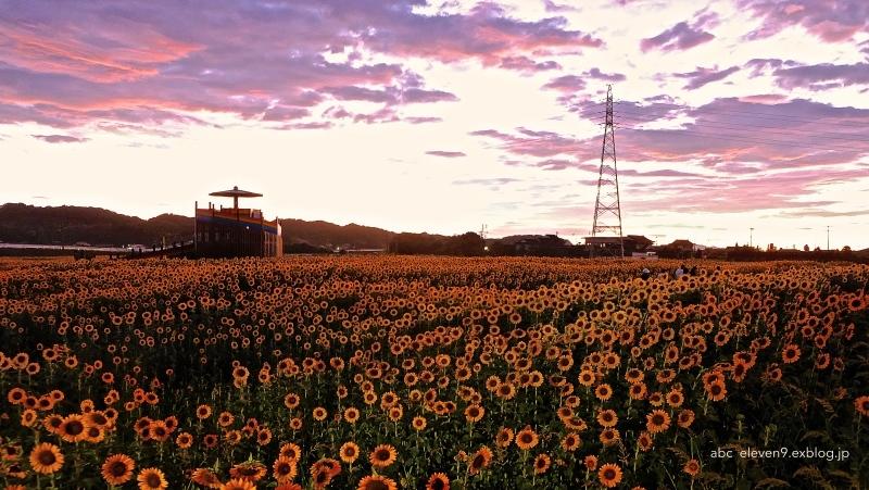 Sunflower Fields_f0315034_17050733.jpg