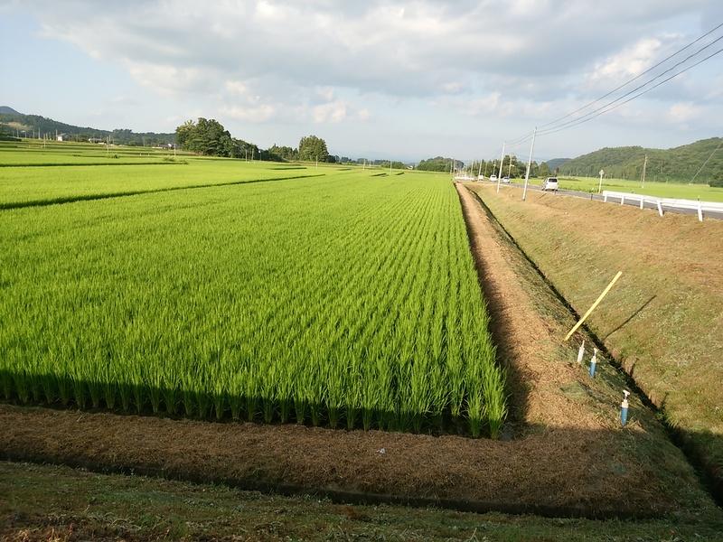 農作業_e0161791_2213645.jpg