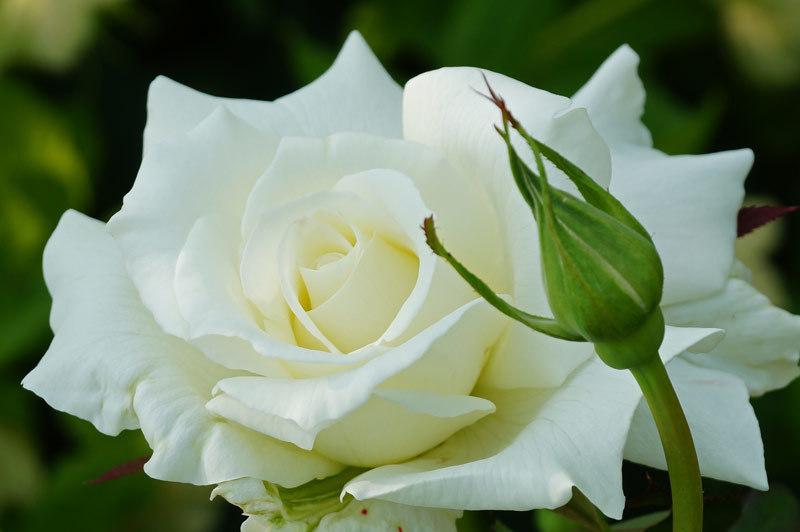白い花_d0162994_05551623.jpg