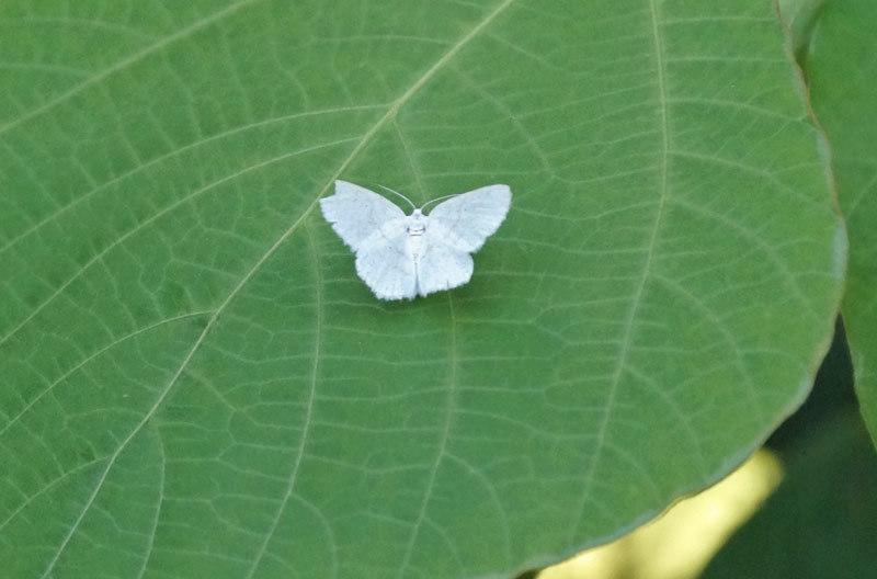 白い花_d0162994_06061326.jpg