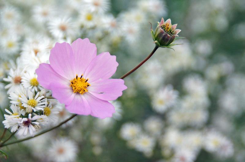 白い花_d0162994_06063249.jpg