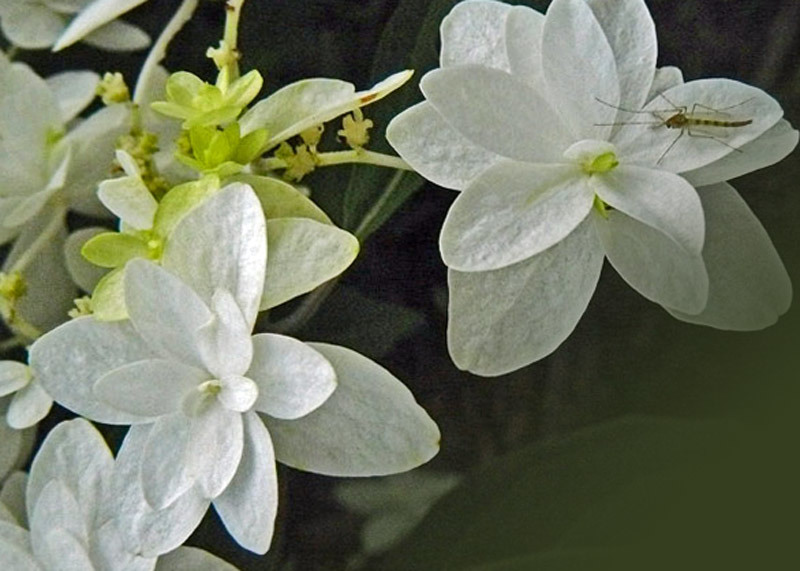 白い花_d0162994_08260336.jpg