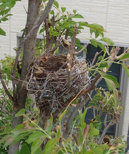 鳥の巣_a0026295_15294368.jpg