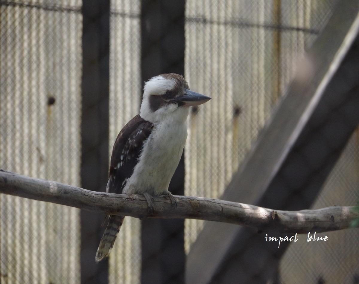 キャンベルタウン野鳥の森に行ってみた(^^)/_a0355908_15575485.jpg