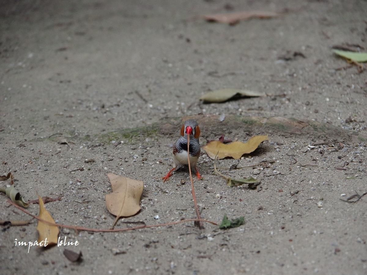 キャンベルタウン野鳥の森に行ってみた(^^)/_a0355908_15580000.jpg