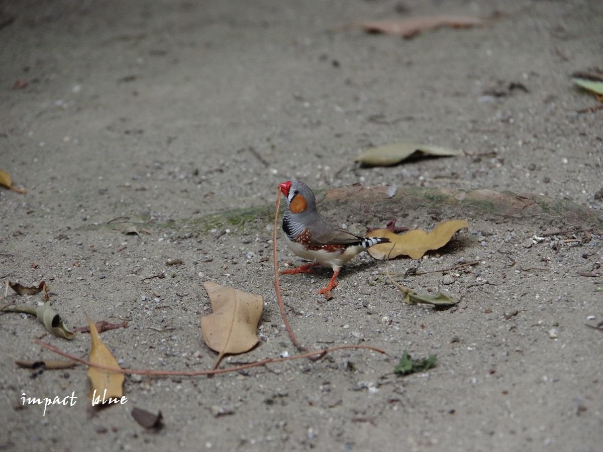 キャンベルタウン野鳥の森に行ってみた(^^)/_a0355908_15580489.jpg