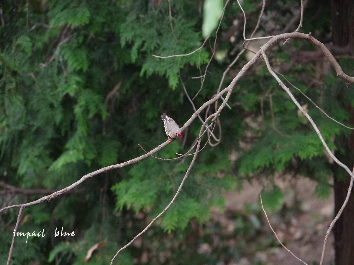 キャンベルタウン野鳥の森に行ってみた(^^)/_a0355908_15581012.jpg