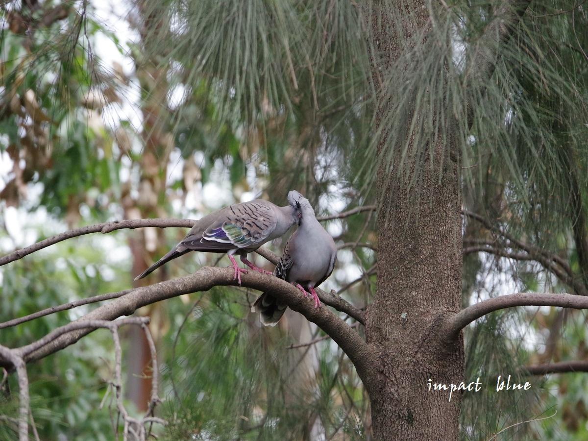 キャンベルタウン野鳥の森に行ってみた(^^)/_a0355908_15581457.jpg