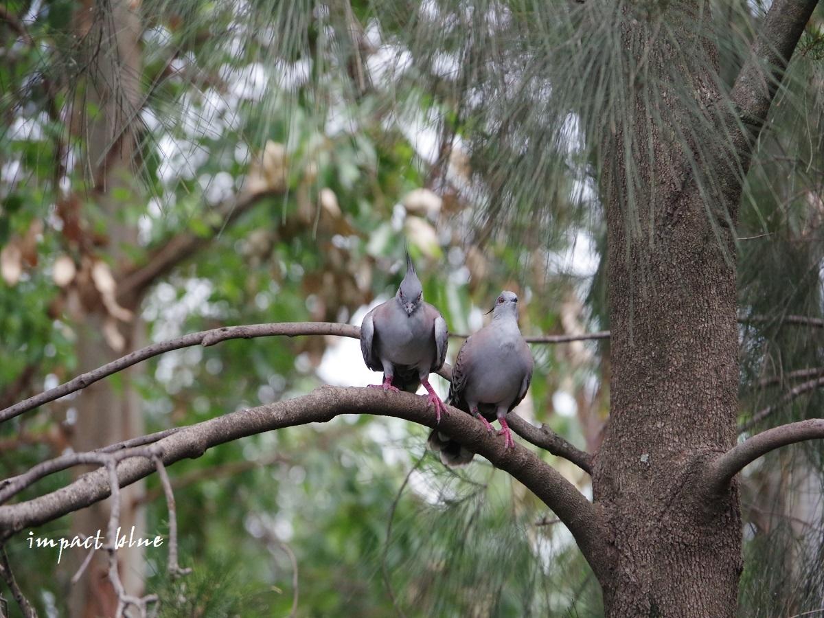 キャンベルタウン野鳥の森に行ってみた(^^)/_a0355908_15582399.jpg