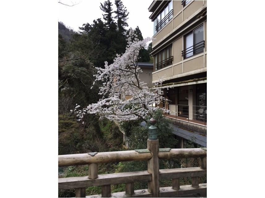 桜 満開です。_c0210517_10021383.jpg