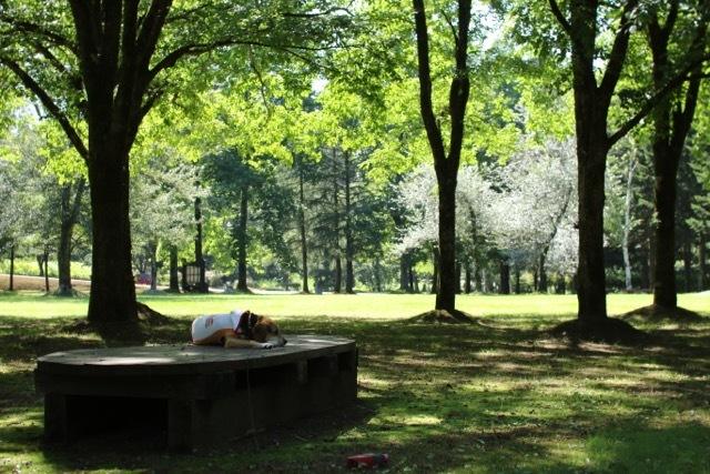 ハルニレの木の下で_b0031538_23171408.jpg